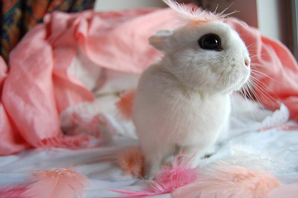 2010, 6-20 Daily Bunny