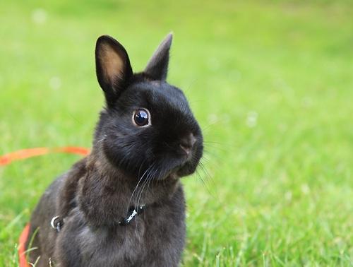 2010, 6-1 Daily Bunny