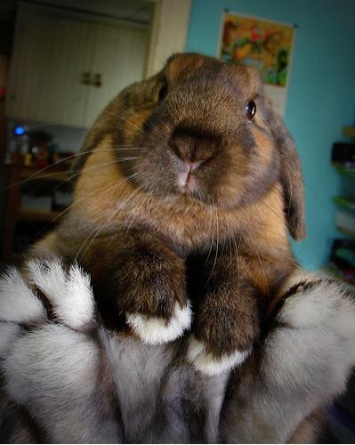 2010, 6-21 Daily Bunny.2