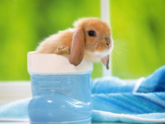 2010, 6-22 Daily Bunny