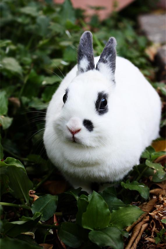 2010, 6-26 Daily Bunny