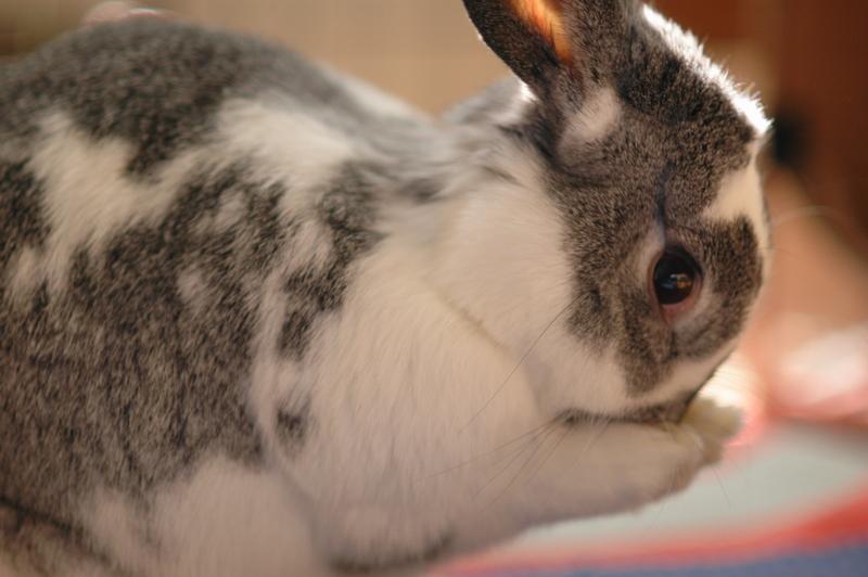 2010, 6-27 Daily Bunny