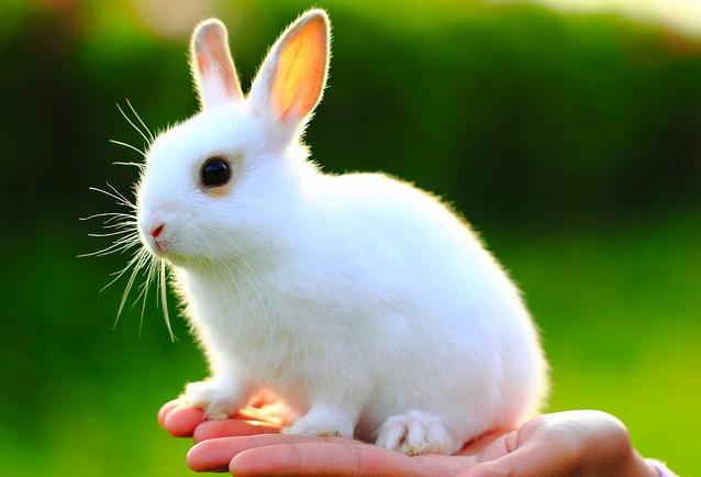 2010, 6-28 Daily Bunny