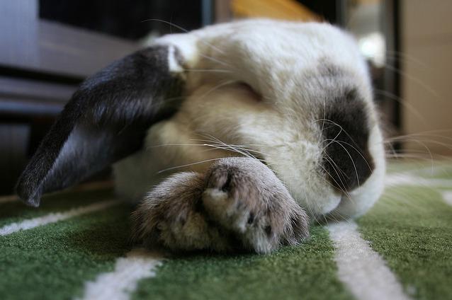 2010, 6-29 Daily Bunny