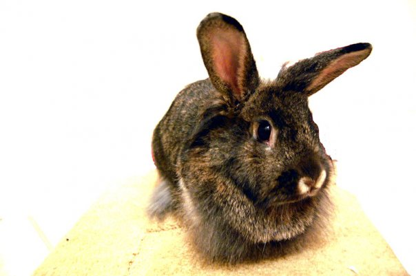 2010, 7-4 Daily Bunny