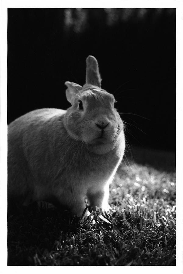 2010, 7-1 Daily Bunny