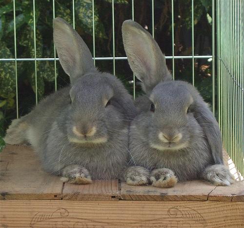 2010, 7-8 Daily Bunny