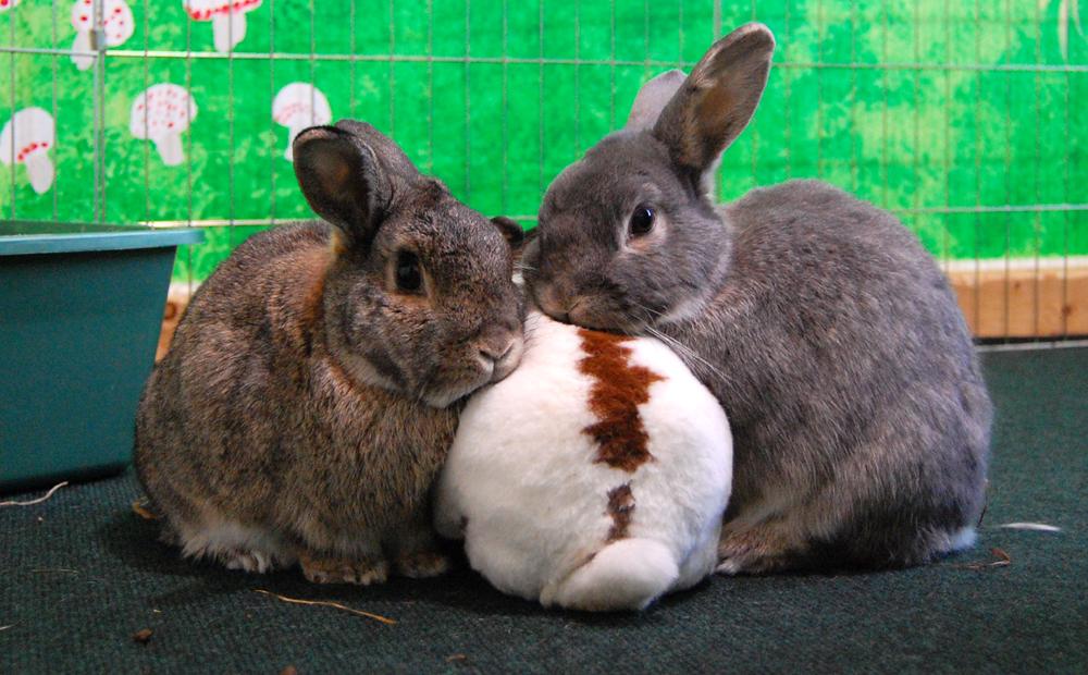 2010, 7-9 Daily Bunny