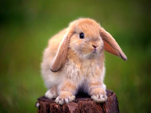 2010, 7-22 Daily Bunny
