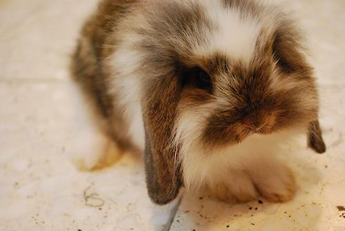 2010, 7-26 Daily Bunny