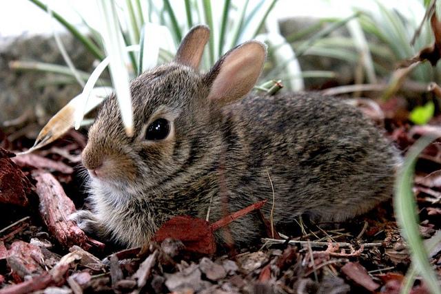 2010, 7-28 Daily Bunny