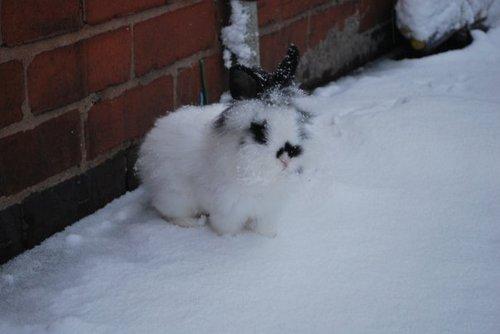 2010, 8-3 Daily Bunny