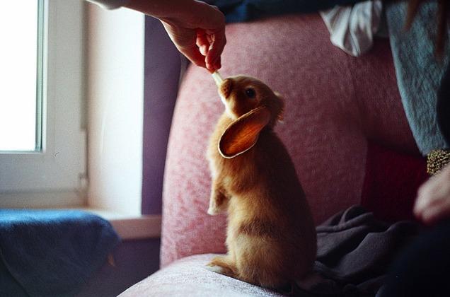 2010, 8-6 Daily Bunny