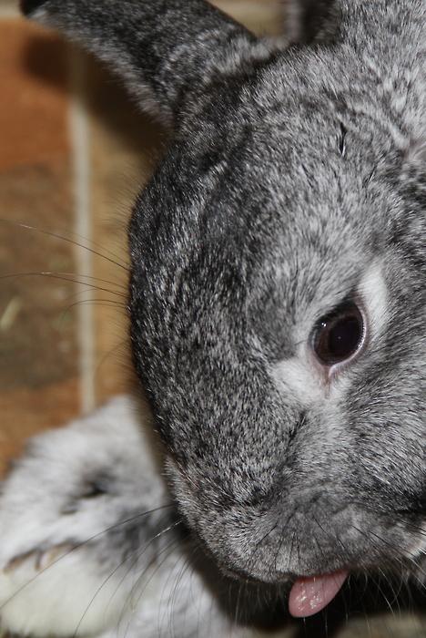 2010, 8-7 Daily Bunny