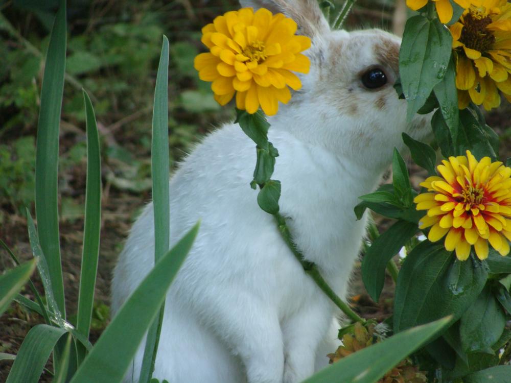 2010, 8-9 Daily Bunny
