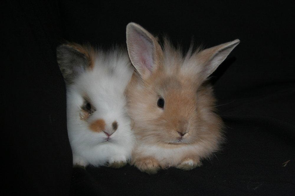 2010, 8-12 Daily Bunny