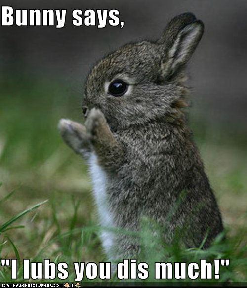 2010, 8-1 Daily Bunny