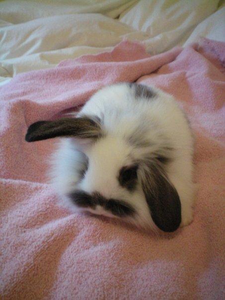 2010, 8-25 Daily Bunny