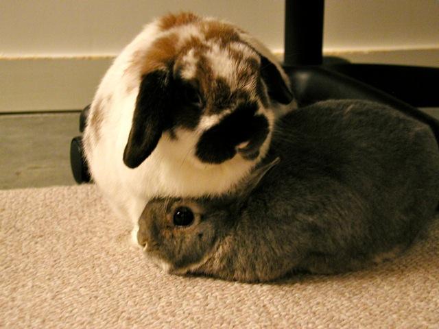2010, 9-2 Daily Bunny