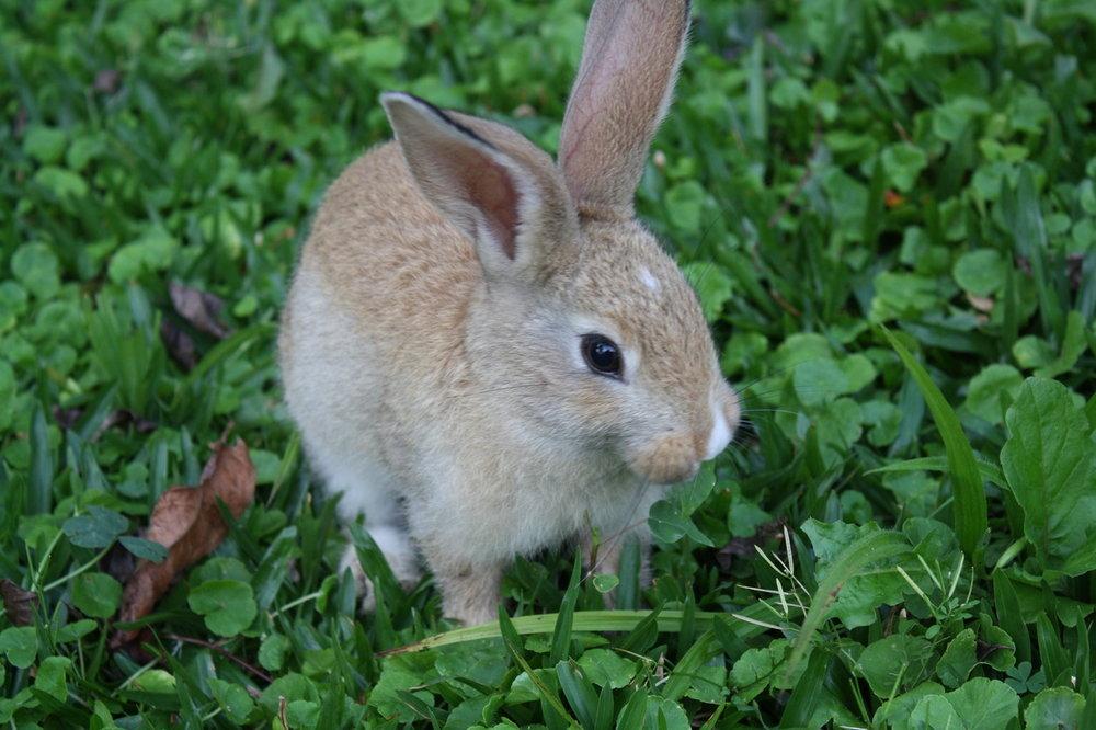2010, 9-3 Daily Bunny