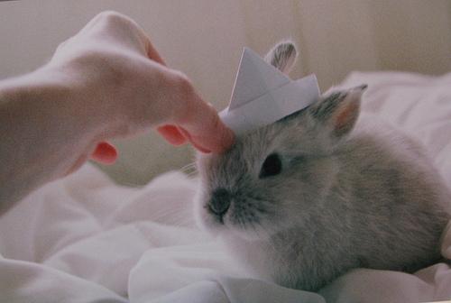 2010, 9-4 Daily Bunny