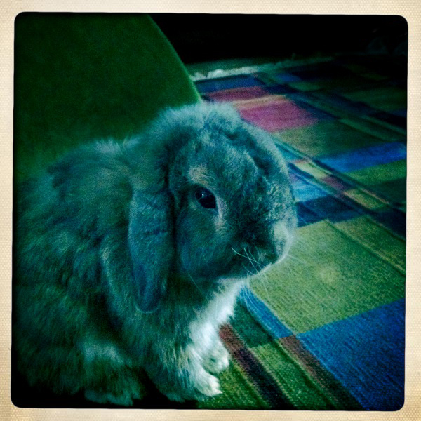 2010, 9-6 Daily Bunny
