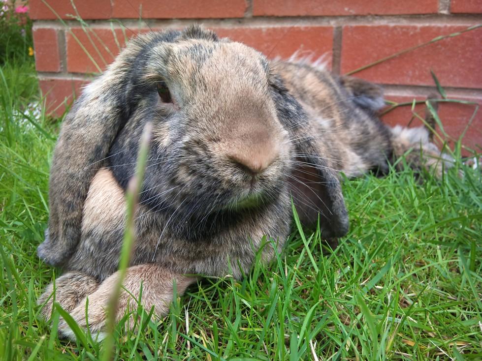 2010, 9-8 Daily Bunny