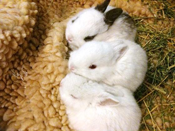 2010, 9-9 Daily Bunny