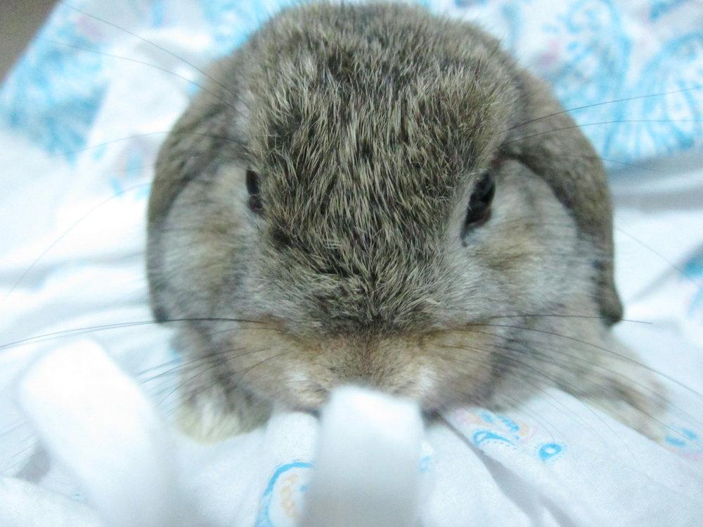 2010, 9-1 Daily Bunny