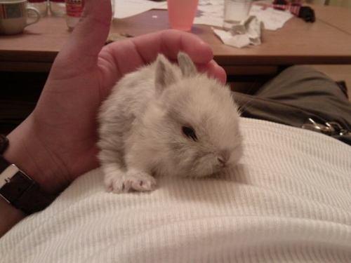 2010, 9-20 Daily Bunny
