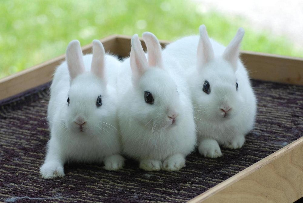 2010, 9-22 Daily Bunny