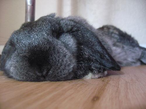 2010, 9-24 Daily Bunny