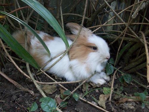 2010, 9-25 Daily Bunny