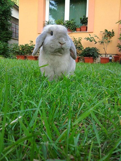 2010, 9-26 Daily Bunny