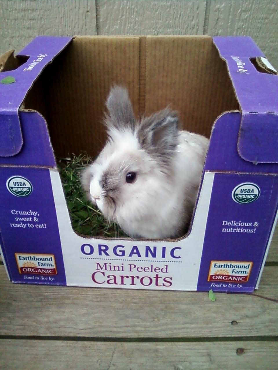 2010, 9-27 Daily Bunny