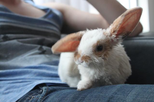 2010, 9-30 Daily Bunny