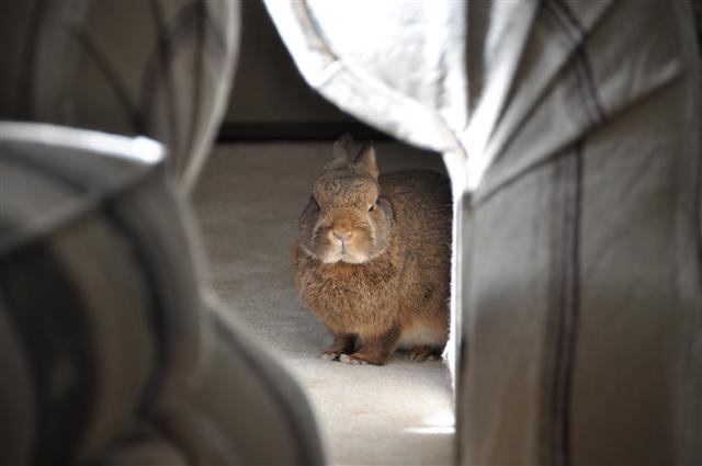 2010, 10-4 Daily Bunny