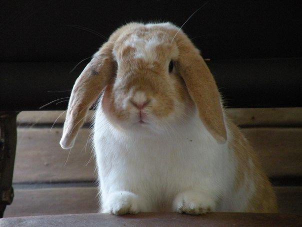 2010, 10-8 Daily Bunny