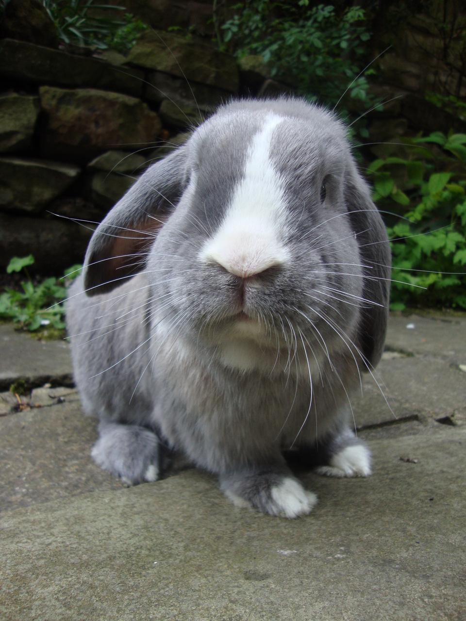 2010, 10-9 Daily Bunny