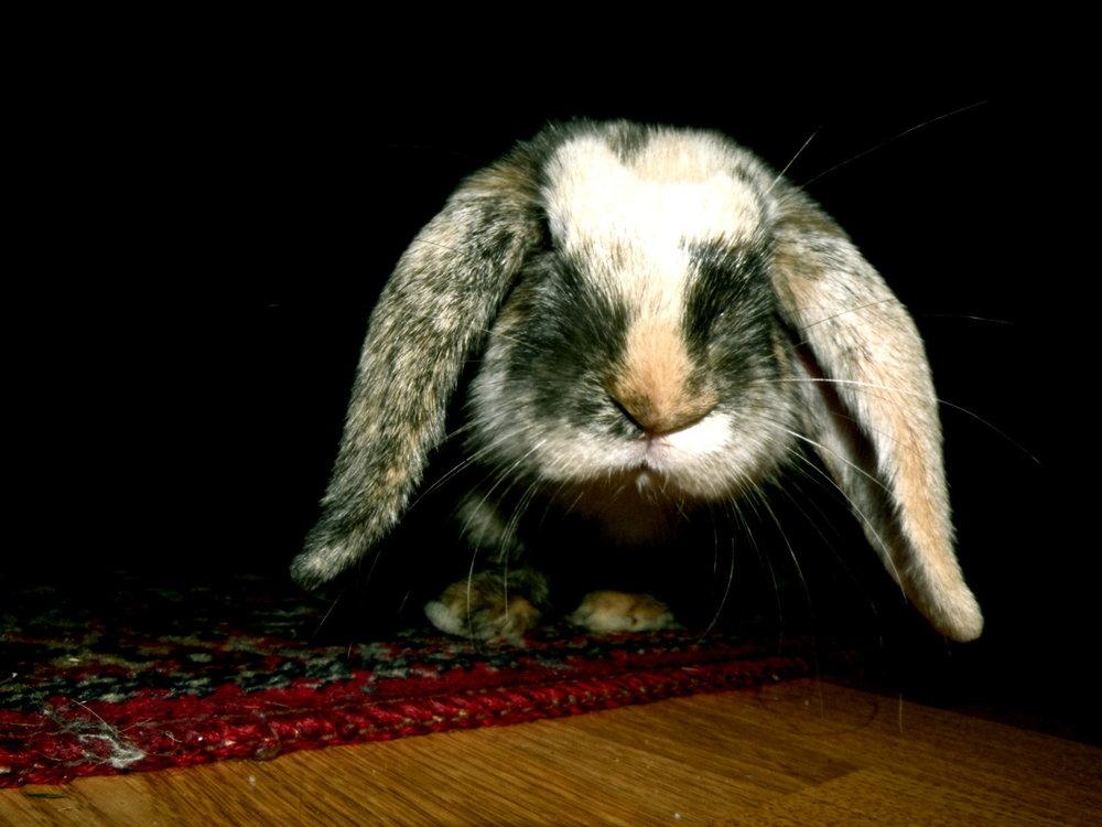 2010, 10-1 Daily Bunny