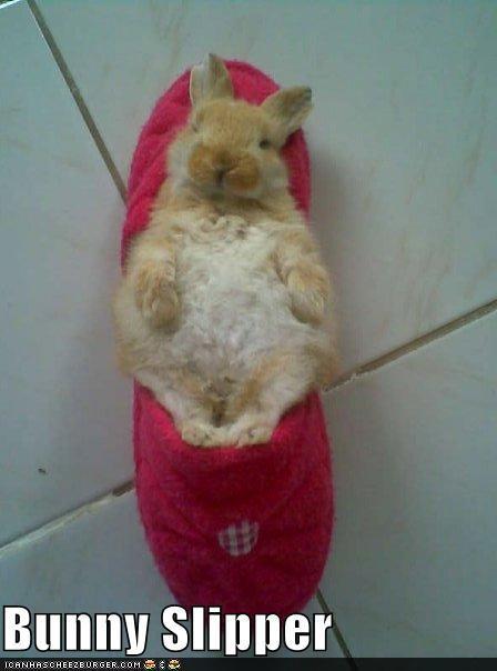2010, 10-15 Daily Bunny