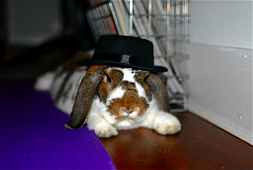 Disapproving Bunny Wears Hat