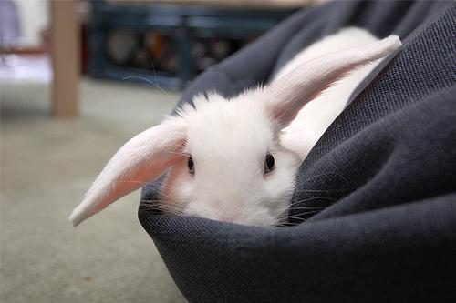 Bunny Nestles in... a Beanbag?