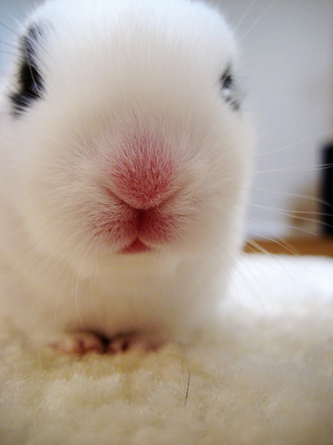 Pink Bunny Nose