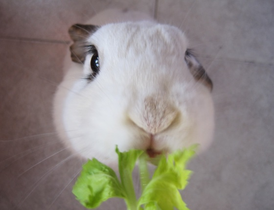 Bunny Stands for his Lettuce