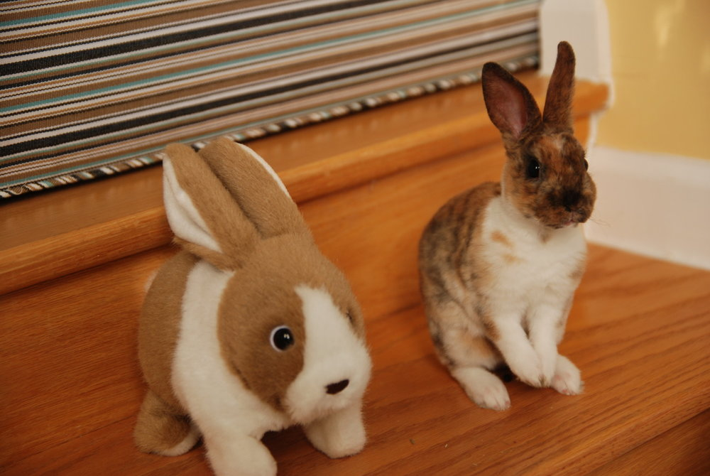 Bunny Sits with a Friend