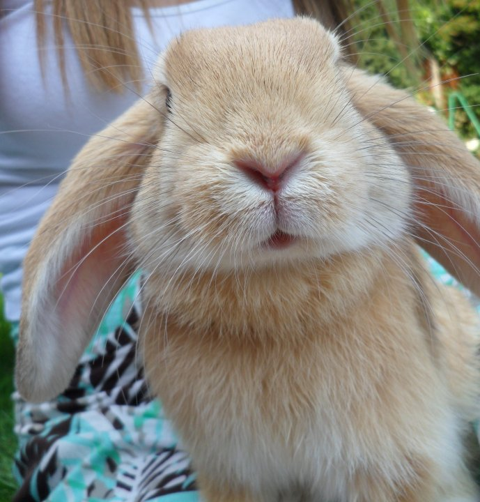 Bunny Is Ready for His Closeup