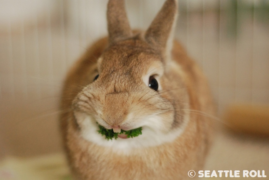 The Elusive Parsley Grin
