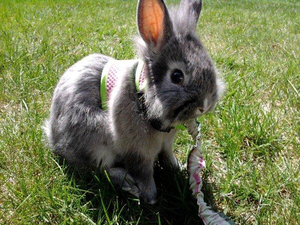 Bunny Enjoys the Sun and Grass