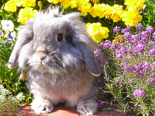 Bunny in the Flower Garden